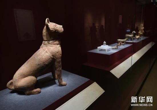 1月5日,东汉陶坐狗(左)等文物在展厅展出。新华社记者孙参摄