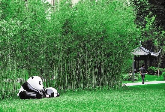 春节期间19处熊猫绿道率先亮相 吸引不少市民欣赏拍照
