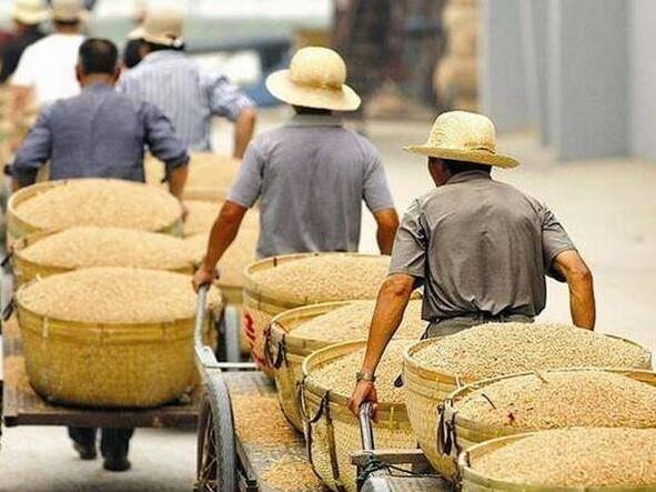 四川2017年中籼稻托市收购结束:促农增收6000多万元