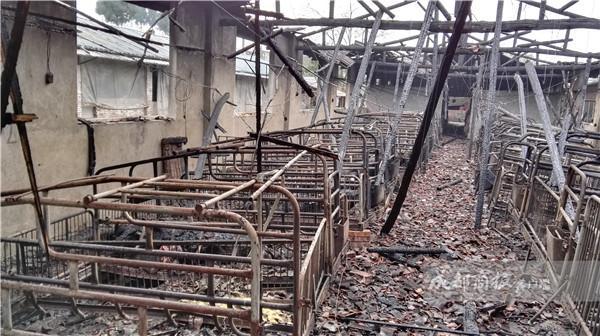 养猪场起火 290头未满月猪宝宝和17头临产猪被烧死