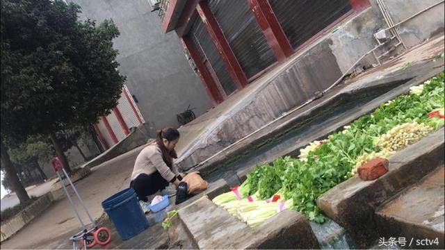 眉山商家将芹菜泡脏水再出售 是为卖相还是其他
