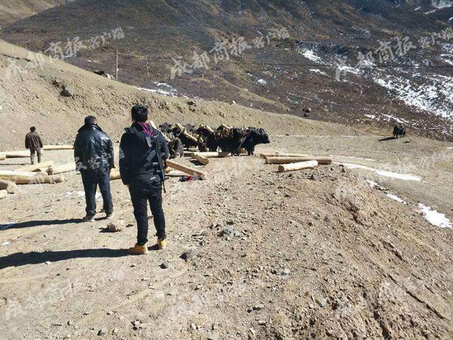 甘孜警方连续查获3起非法盗运木材案 6人被抓