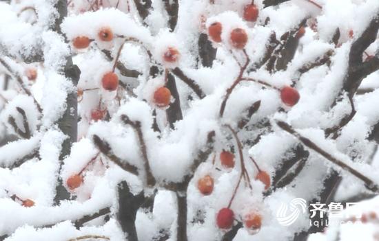 青州仰天山 临朐沂山迎来初雪