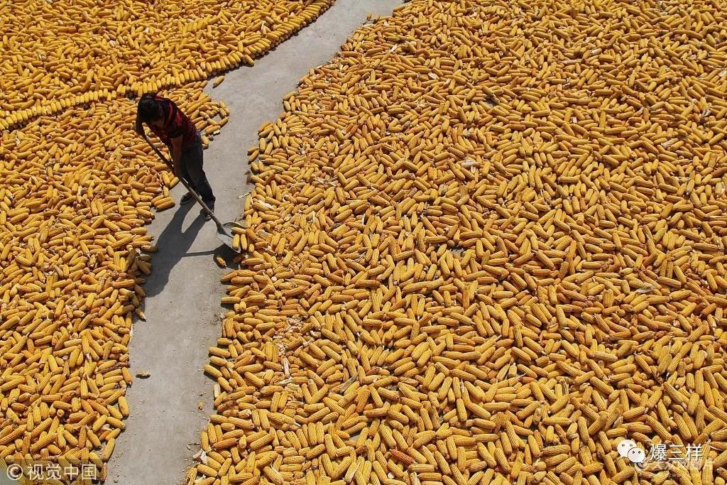农民怎么评职称 方案定了 11月底前东营率先开展申报