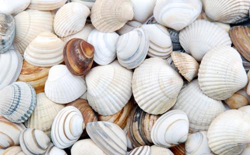 出国旅游当心 贝类吃完留作纪念带回国 有可能触犯法律