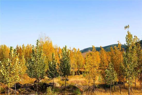 尼山圣境喊你参加秋季最美徒步活动!