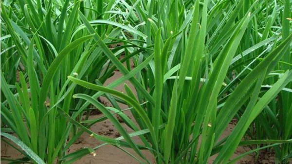 韭菜农药含量超标 德州科技职业学院青岛校区被罚