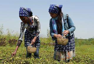 留学生体验中国茶文化