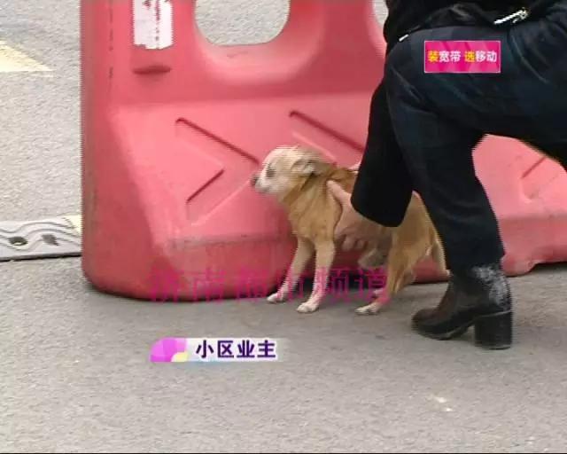 济南一小区不允许狗狗上电梯 还要限定遛狗时间