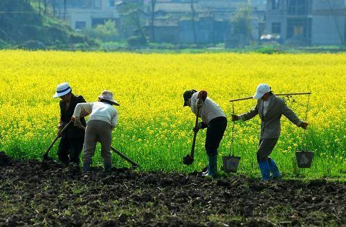山东省职业农民职称评定试点扩至14市
