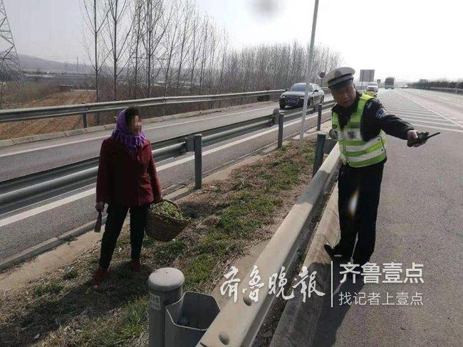 春天来了想尝鲜:老太太跑上高速公路挖野菜