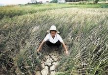 两成在田农作物受旱 山东近期已调引黄河水3.13亿立方米