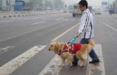 无障碍车位 导盲犬上公交 山东这项新规全说清了