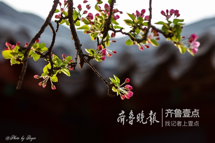 又是一年春满园 大明湖到底有多美