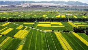莱芜市农业局加快特色农业提质增效持续培育新动能