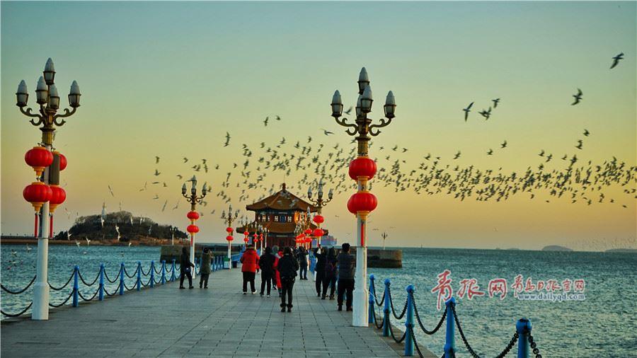 海鸥和晚霞共舞 市民游客冒寒风围观