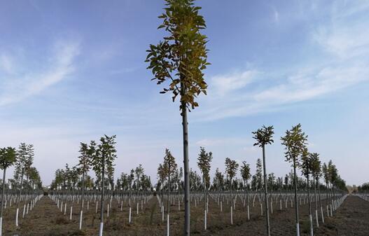阳信奖补政策推进林业生产提档升级