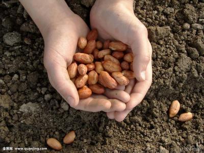 """山东将开展""""种子质量年专项行动"""" 着力提升种子质量"""