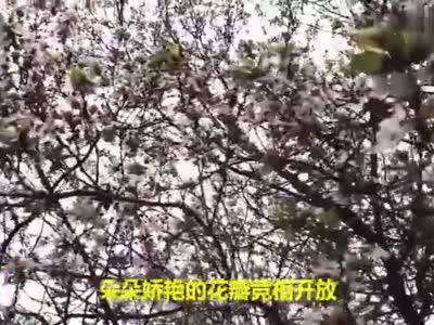 春风十里浪漫花开 山东这所高校进入最美季节