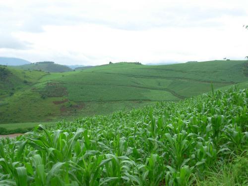 去年山东开展农作物有害生物防控6.08亿亩次 挽回产量损失210