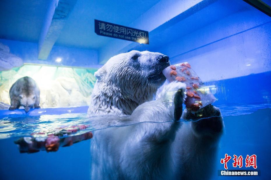 蓬莱海洋动物享高温福利