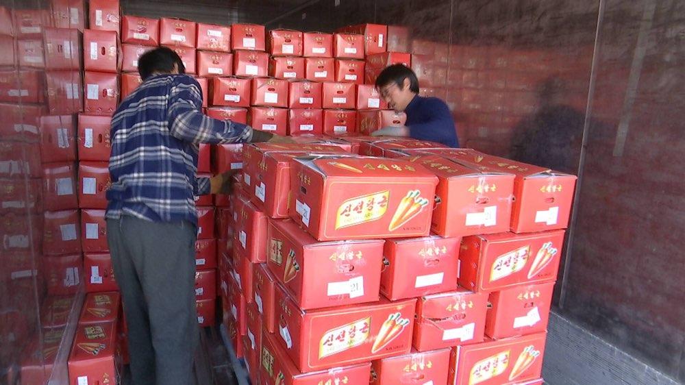 5毫米樱穗致山东35个集装箱胡萝卜被退运