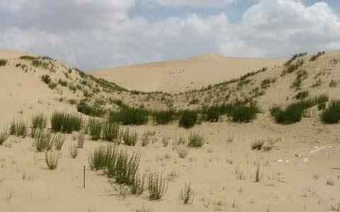 山东沙化荒漠化土地基本治理完毕 这些沙区形成特色产业