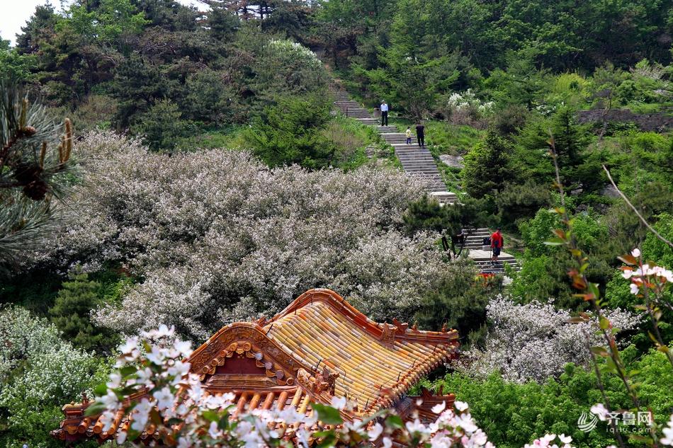 泰山海棠花盛开 漫山遍野美景如画