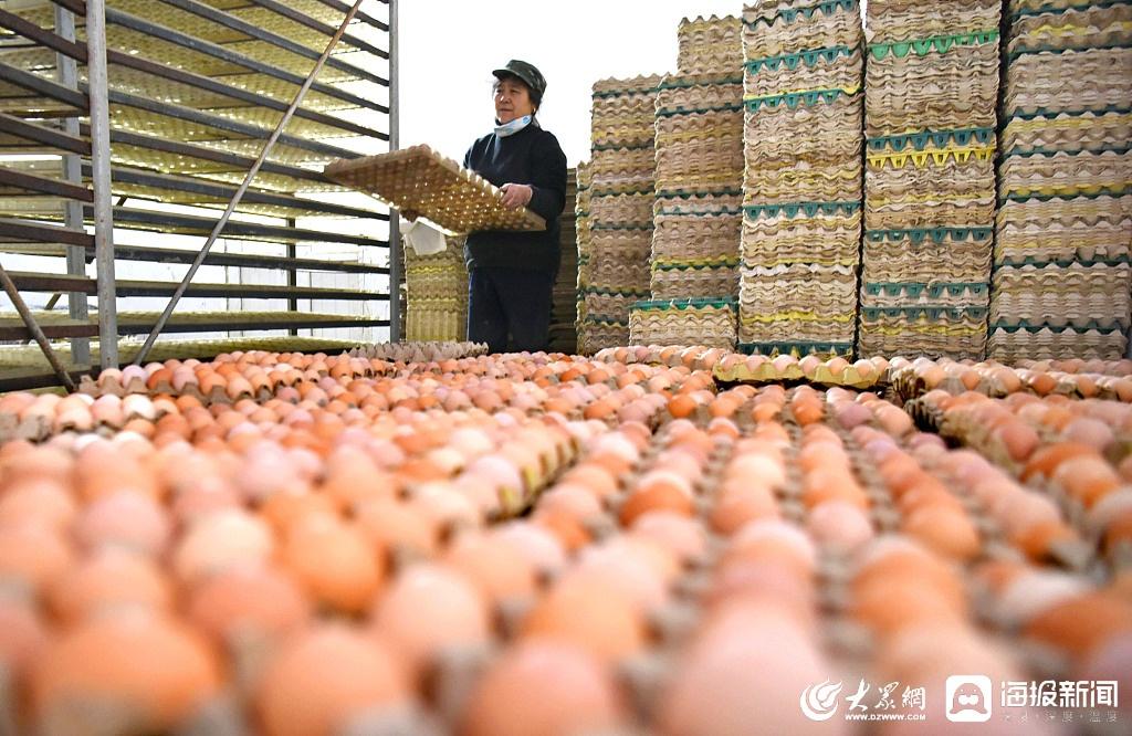 山东鸡蛋价格创年内新低 最低5.30元/公斤