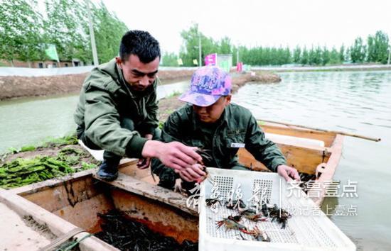 在鱼台县张黄镇梁岗村,养殖户宋艳辉正在分拣捕捞起来的小龙虾。