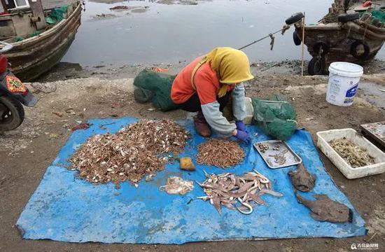 沙子口南姜码头,当季收官海鲜种类丰富