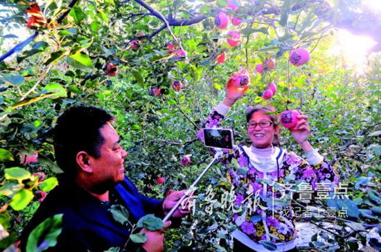 金秋十月,贾明三夫妇在自家果园里现场直播私人定制苹果的生长状况。
