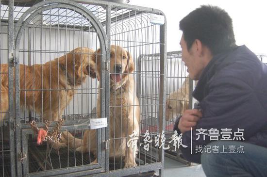 拉布拉多比较适合做导盲犬。齐鲁晚报·齐鲁壹点记者 段学虎 摄