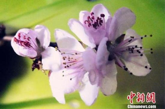 ↑资料图:杨厚伟 摄