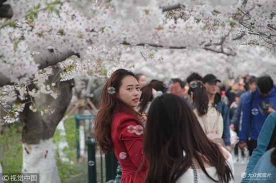 短短700米的樱花大道寸步难行,远远望去现场人山人海,甚是壮观。