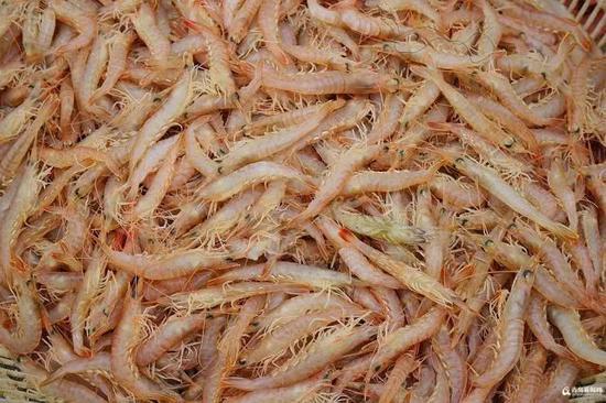 鲜美的蛎虾