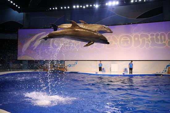 精彩的海豚表演
