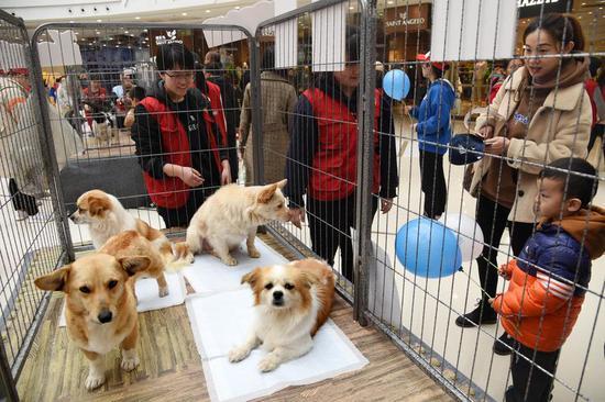 市民在活动现场了解待领养动物的情况。