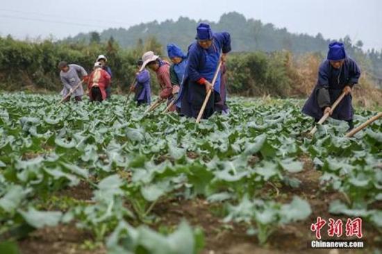 ↑资料图:春分时节农事忙。中新社记者 贺俊怡 摄