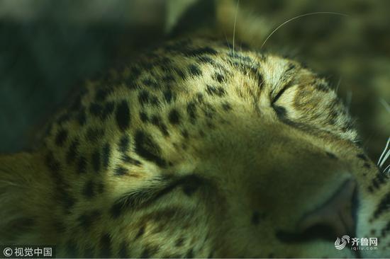 看我乖嘛?怎么样,动物们的睡姿有没有萌化你呢?