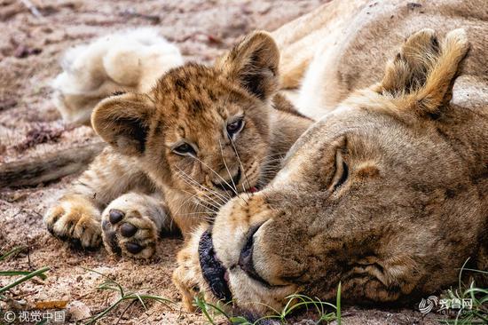看,妈妈睡着啦