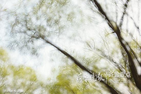 陈甡 3月21日摄于济南大明湖