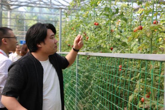 网络名人们参观西红柿示范大棚