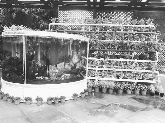 齐鲁园内鱼缸搭配蔬菜展架展示了鱼菜共生系统。(□记者 方垒 报道)