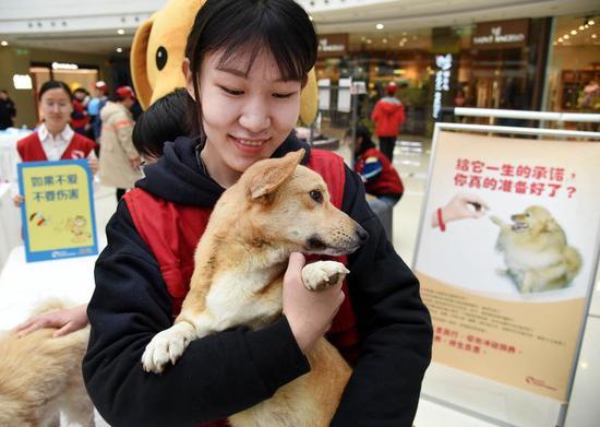 来自青岛农业大学的志愿者在安抚一只待领养的小狗。