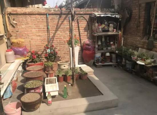 张福妻子庆李桂兰在院子里养的花