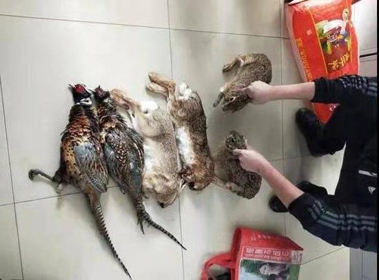 萊陽公安破獲一起非法狩獵野生動物案