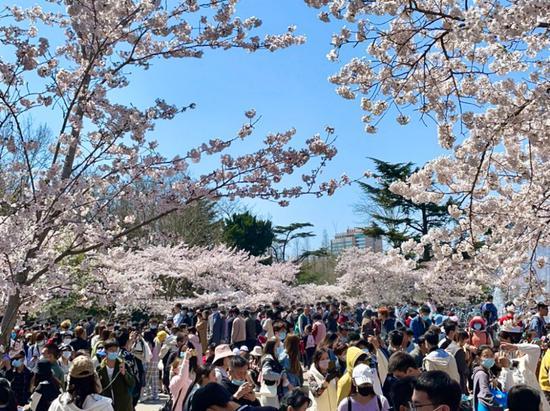 节后升温 未来三天青岛内陆地区最高21℃