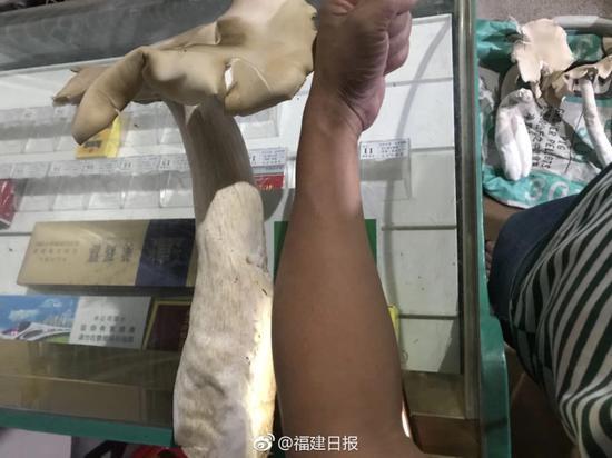 市民家门缝长巨型菇