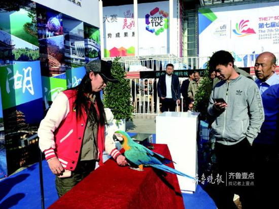来自济南野生动物世界的鹦鹉互动吸引了市民游客。